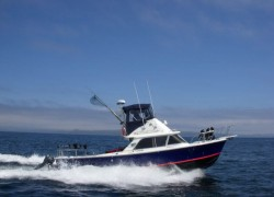boat6-min