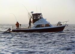 boat7-min